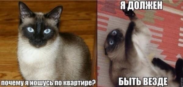 Тайна квартирной кошки