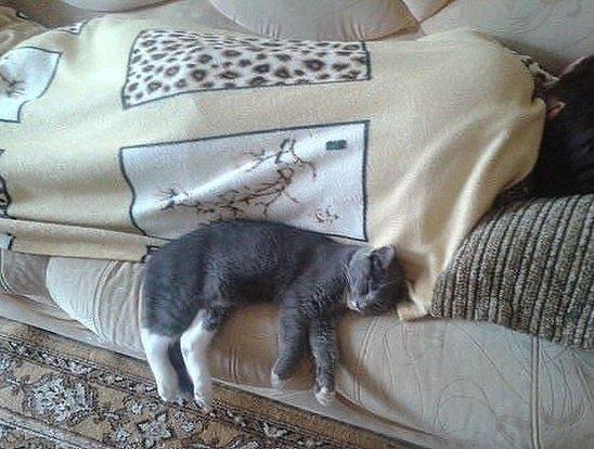Кошка спит с человеком